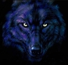 bills-wolf-evil-eyes.jpg